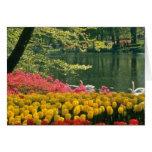 Keukenhof rose fait du jardinage, Lisse, fleurs de Cartes De Vœux