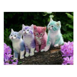 kittens avec la couleur cartes postales
