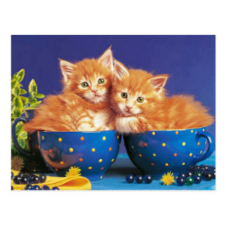 kittens dans la tasse cartes postales