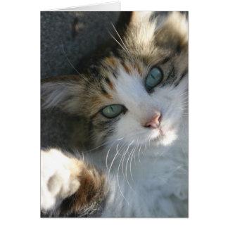 Kitty espiègle carte de vœux