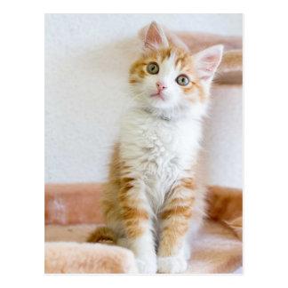Kitty observé par bleu doux carte postale