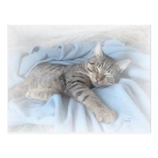 Kitty somnolent carte postale