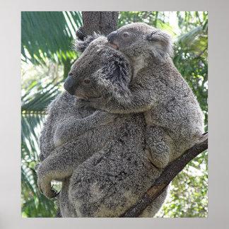 Koala d'affiche et photo ZIZZAGO de l'Australie de