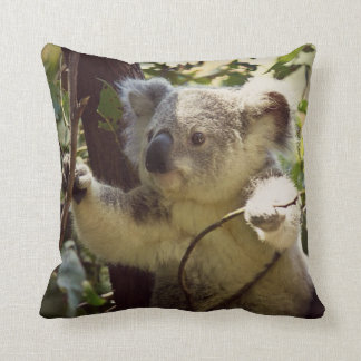 koala doux 2b coussin