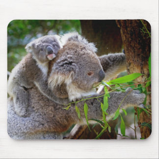 Koala mignons tapis de souris
