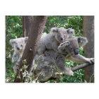 Koala QLD Australie de carte postale