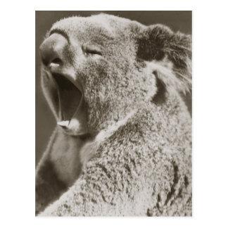 Koala somnolent baîllant carte postale