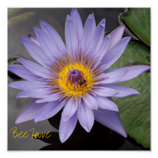 L abeille ont l affiche