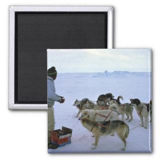 L Esquimau polaire alimente des chiens Aimant