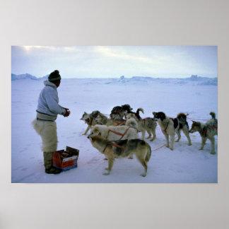 L Esquimau polaire alimente des chiens Poster