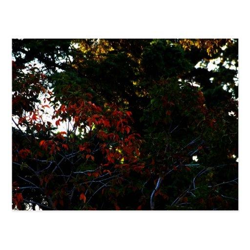 La beauté de l'automne cartes postales