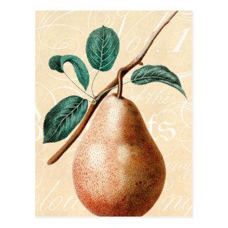 La branche vintage W de fruit de poire de 1800s Carte Postale