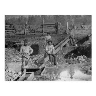 ~ la Californie 1850 de mineurs de fièvre de l'or Carte Postale