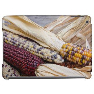 La Californie. Maïs coloré de récolte de chute