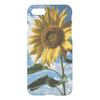 La Californie, un tournesol gigantesque Coque iPhone 7