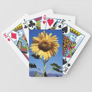 La Californie, un tournesol gigantesque Jeu De Poker
