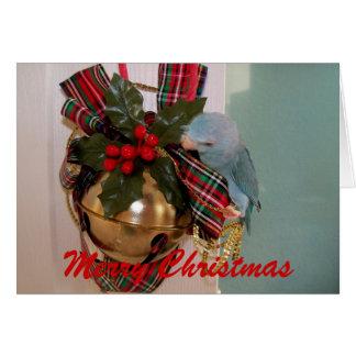 La carte de voeux de Joyeux Noël de Parrotlets