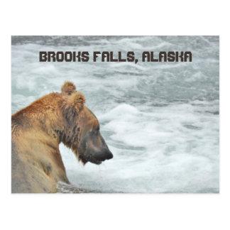 La carte postale de l'ours gris aux ruisseaux