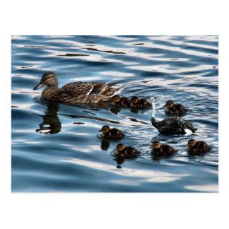 La carte postale de vilain petit canard