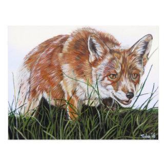 La carte postale renard