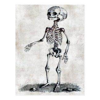 La carte postale squelettique de l'enfant