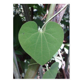 La carte postale verte de coeur