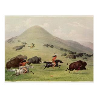 La chasse de Buffalo, c.1832 Carte Postale