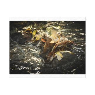 La chute laisse la photo de l'eau toiles
