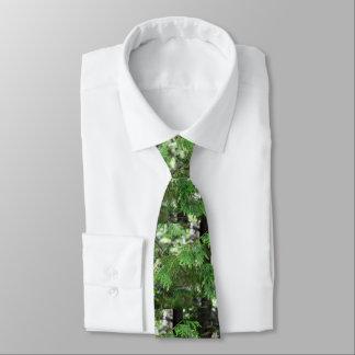 La cravate des hommes sacrés de cèdre
