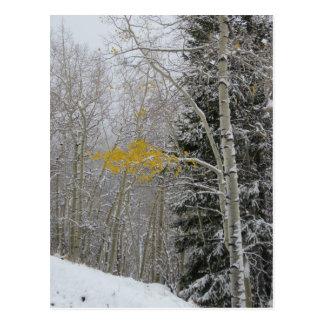 La dernière carte postale d'Aspen