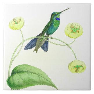 La faune d'oiseaux de colibri fleurit les animaux carreau