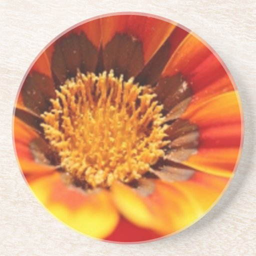 La fleur de Zinnia boit le caboteur Dessous De Verres