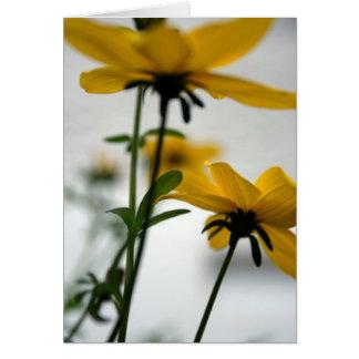 La fleur jaune - Bidens - ne tournent pas loin Cartes