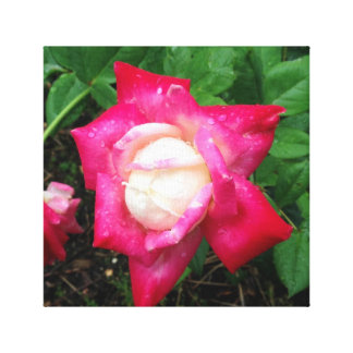 La floraison s'est levée dans la rosée de matin toiles