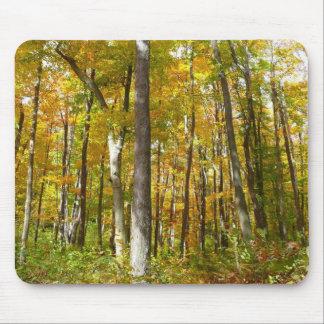 La forêt de jaune part de la photographie de tapis de souris
