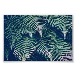 La fougère tropicale verte part du motif naturel impression photo