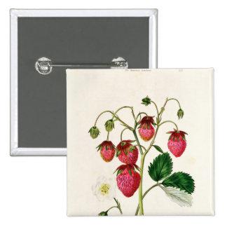 La fraise de Roseberry, gravée par Watte Badges