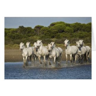 La France, Camargue. Chevaux courus par l'estuaire Carte De Vœux