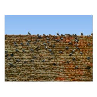La France, Jura, Arbois, pigeons sur le toit Carte Postale