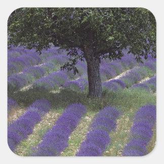 La France, PACA, Alpes-De-Haute-Provence, Sticker Carré
