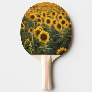 La France, Vaucluse, gisement de tournesols Raquette Tennis De Table