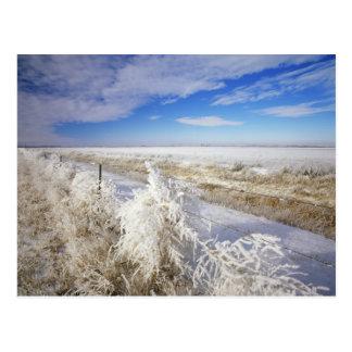 La gelée enduit l'amarante et le fenceline près carte postale