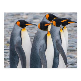 La Géorgie du sud. Pingouins de roi Carte Postale