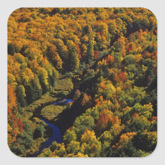 La grande rivière de carpe en automne au porc-épic autocollant carré