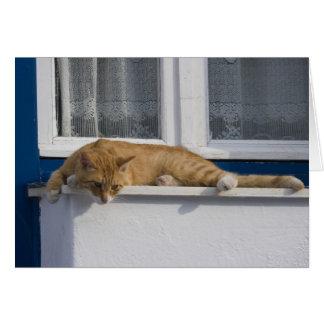 La Grèce, Mykonos. Regards oranges curieux de chat Carte De Vœux