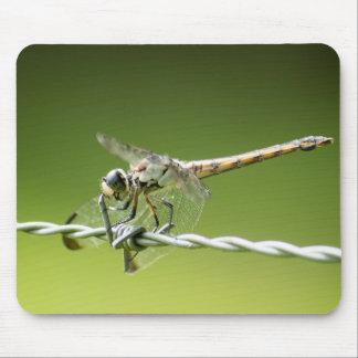 La libellule défie le tapis de souris de barbelé