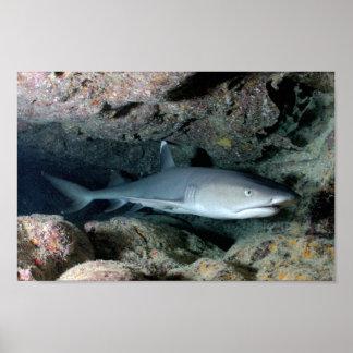 La maison de bain de poissons de requin posters