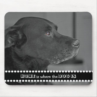 La maison de photo de chien est où le chien est tapis de souris