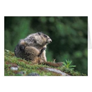 la marmotte blanchie, caligata de Marmota, raye Carte De Vœux