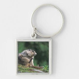 la marmotte blanchie, caligata de Marmota, raye Porte-clé Carré Argenté